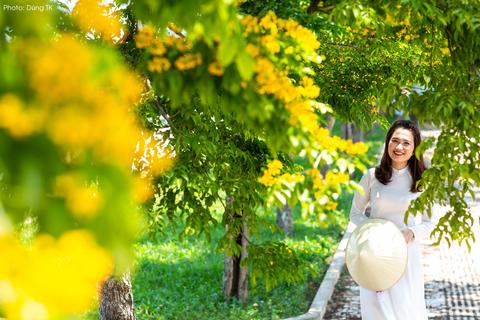 Ngắm hoa sưa nở vàng rực đường phố Tam Kỳ