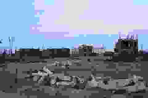 """Nghệ An: """"Treo"""" tiến độ thực hiện, 151 dự án bị thu hồi đất"""
