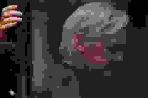"""Julian Assange - câu trả lời cho """"nghi án"""" Nga can thiệp bầu cử Mỹ"""