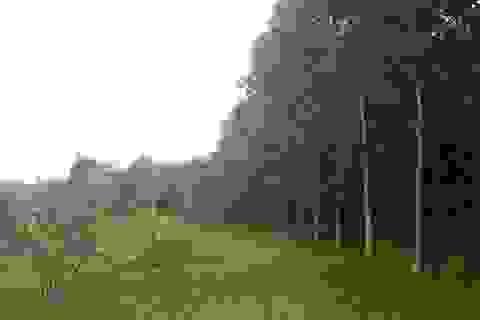 """Công ty lâm nghiệp để mất gần 1.000 ha rừng, Giám đốc """"chiếm"""" đất làm trang trại?"""