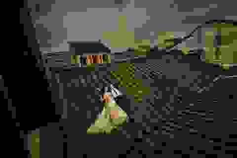 """Đã hết cảnh """"đè đầu cưỡi cổ"""" di tích ở Hội An để chụp ảnh cưới"""