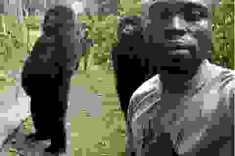 """Chàng kiểm lâm gây """"sốt"""" cộng đồng mạng khi selfie với…. khỉ đột"""