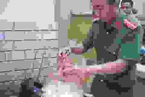 Ngăn chặn gần 1,5 tấn sụn gà đã bốc mùi đang trên đường đi tiêu thụ