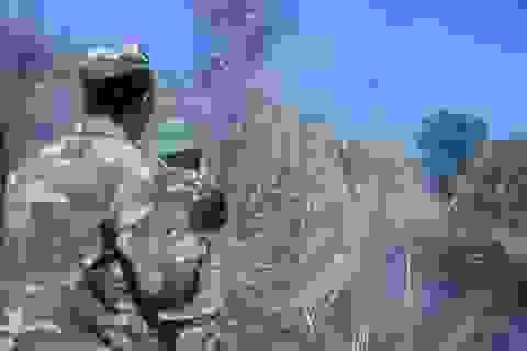 Huy động hàng trăm cán bộ chữa cháy rừng đặc dụng Đèo Cả