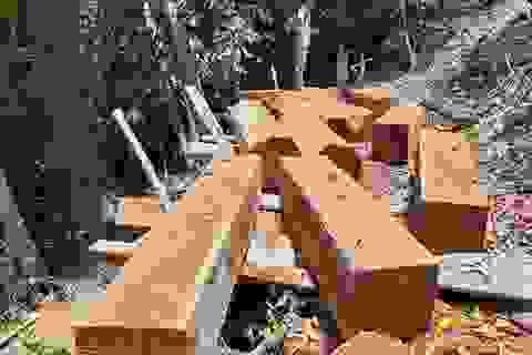 Phát hiện 2 vụ phá rừng tự nhiên