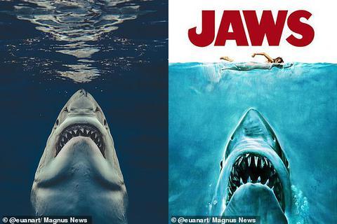 """Bức ảnh gợi nhớ sự kinh hoàng của """"Hàm cá mập"""""""