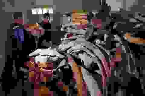 """Quảng Ngãi: Phục dựng bộ xương cá voi """"khủng"""" trên đảo Lý Sơn"""