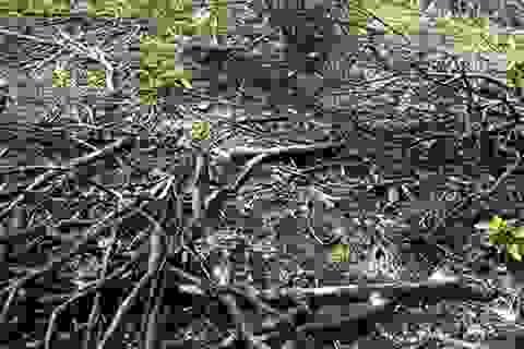 Phạt công ty nguyên liệu TH 40 triệu đồng về tội phá rừng trái phép