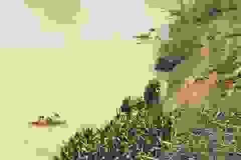 Xử lý nghiêm tình trạng vứt xác lợn chết ra môi trường