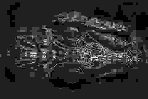 Bí ẩn xương cá sấu cổ đại được tìm thấy tại sa mạc cổ ở Israel
