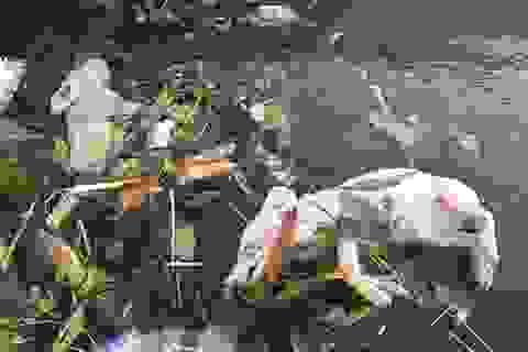 Cấp kinh phí thu dọn xác động vật nổi lềnh bềnh trên kênh thủy lợi
