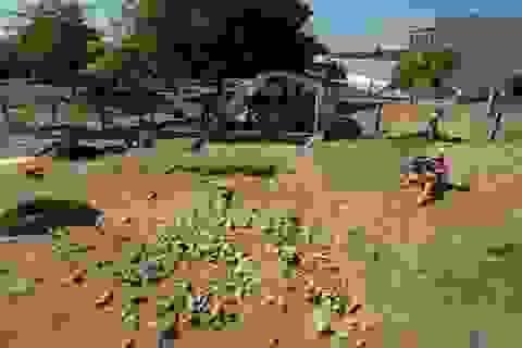 Học sinh mẫu giáo vô tình khám phá ngôi mộ chôn cất bí ẩn ở Pháp