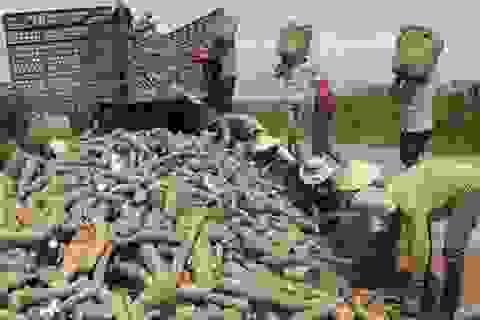 Trung Quốc dựng rào siết chặt, thế mạnh tỷ USD Việt Nam lao đao