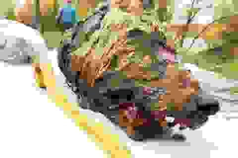 Đầu quái thú 40.000 năm vẫn nguyên vẹn tại vùng Siberia