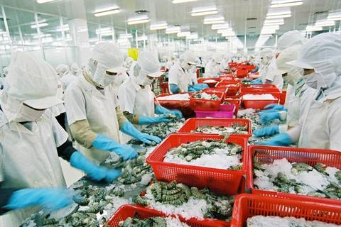 """Nghịch lý: Xuất khẩu tôm tốt nhất thế giới nhưng thi chứng chỉ thì """"rớt ngay"""""""