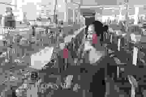Hà Tĩnh:  Xây lầu cho chim ở, mỗi tháng bỏ túi hơn 20 triệu đồng.