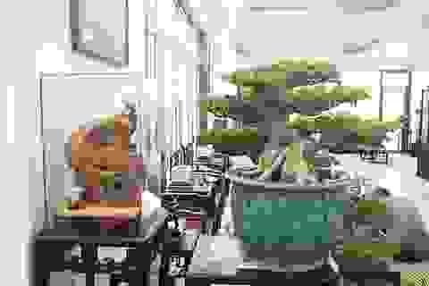 """Bộ sưu tập bonsai tiền tỷ và """"đồ chơi VIP"""" của giới nhà giàu Việt"""
