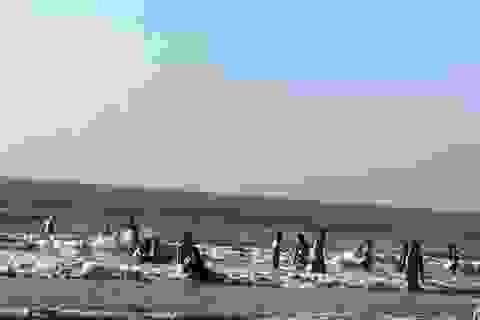 2 du khách tử nạn khi tắm biển Hải Tiến