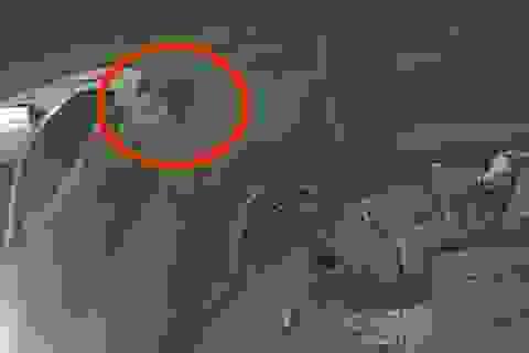 Tài xế taxi bỏ đi sau tai nạn, mặc cho đôi nam nữ thoi thóp bên đường