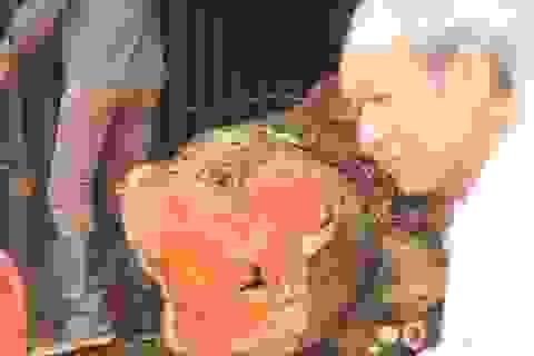 """Hà Nội: Không có người đăng ký đấu giá gỗ sưa """"trăm tỷ"""""""