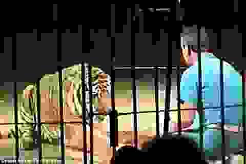 Nghệ sĩ xiếc thú hàng đầu thế giới tử vong vì bị đàn hổ tấn công