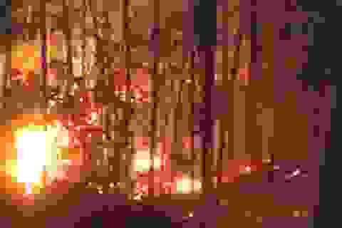 Rừng thông 30 năm tuổi gần lăng vua Khải Định ngùn ngụt cháy trong đêm