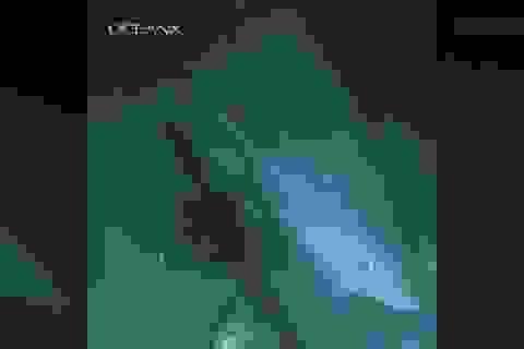 Cá mập biển sâu bí ẩn lớn tuổi hơn cả khủng long