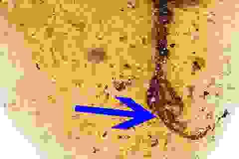 Tìm thấy hoá thạch loài chim cổ xưa với một ngón chân dài kì lạ