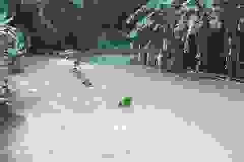 Mưa lớn gây ngập hơn 900 ngôi nhà, 1.000ha lúa và hoa màu