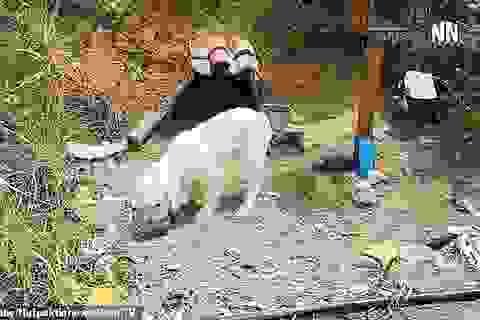 Suốt 18 tháng, chú chó trung thành chờ chủ ở nơi xảy ra tai nạn