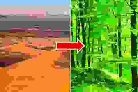 Điều gì sẽ xảy ra nếu chúng ta biến toàn bộ sa mạc Sahara thành rừng?