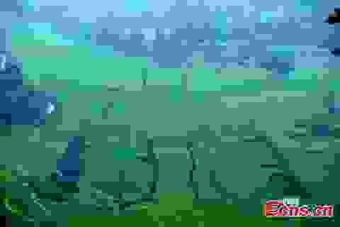 """Tượng Phật dài 100m """"tạc"""" trên ruộng bậc thang"""