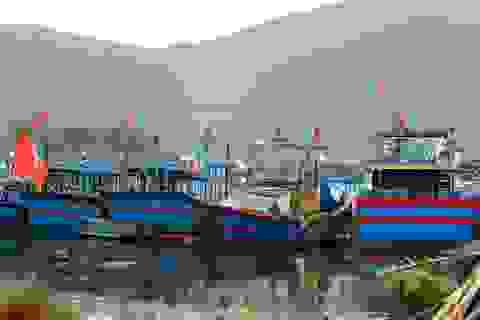 Hàng loạt tàu cá Đà Nẵng nằm bờ vì chiều dài dưới 15m