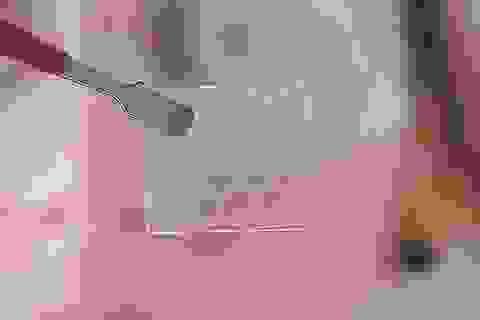 Các nhà nghiên cứu tìm ra vi khuẩn có thể tạo ra siêu vật liệu kỳ diệu