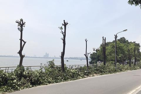 96 cây hoa sữa có át được mùi của bãi rác Nam Sơn?