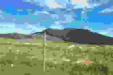 Dự án nuôi bò 4.500 tỷ nguy cơ tiếp tục thất bại khi chuyển sang trồng chuối