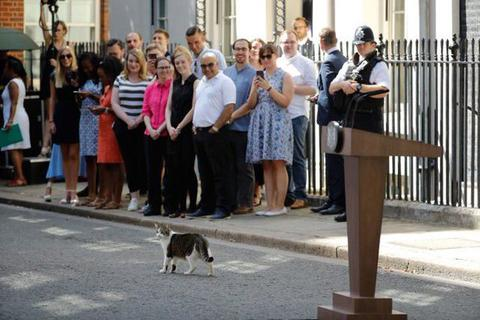 """Sau """"tổng quản mèo"""", dinh thủ tướng Anh có thể có """"đệ nhất khuyển"""""""