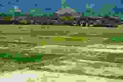 Nghệ An khẩn cấp ứng phó nạn khô hạn kéo dài
