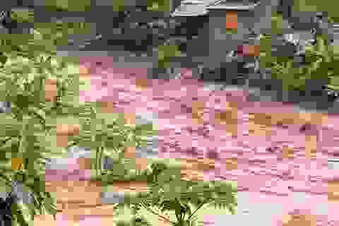 Thanh Hóa: 14 người mất tích do ảnh hưởng mưa bão