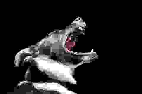 Những mối nguy hiểm đối với sức khỏe khi bị chó cắn hoặc liếm