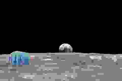 Hàng nghìn con gấu nước bị mắc kẹt trên Mặt Trăng sau sự cố tàu đổ bộ của Israel