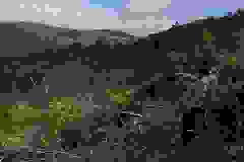 Nguyên Giám đốc Sở NN- PTNT bị khởi tố vì viphạm quản lý rừng