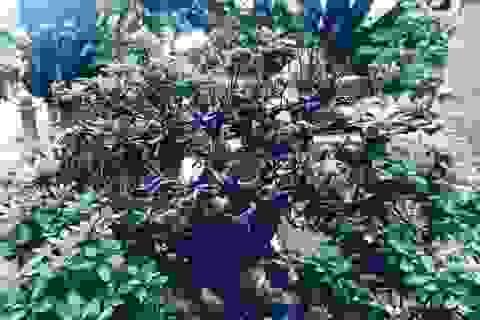 Thê thảm vườn Trầm Bê, loạt đại gia mất trắng chục tỷ
