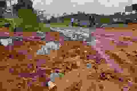 Tạm đình chỉ doanh nghiệp chế biến nông sản xả thải trực tiếp ra tỉnh lộ