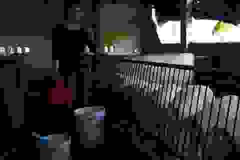 Đàn lợn nhiễm dịch tả lợn Châu phi tự nhiên… khỏe lại