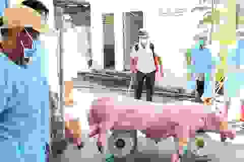 Phú Yên: Phát hiện thêm 2 ổ dịch tả lợn Châu Phi