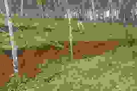 Sụt lún, sạt lở cạnh hồ bùn đỏ Nhà máy Alumin Đắk Nông