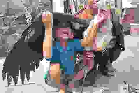 Hà Tĩnh: Bắt được chim khổng lồ nghi là loài cò sói quý hiếm