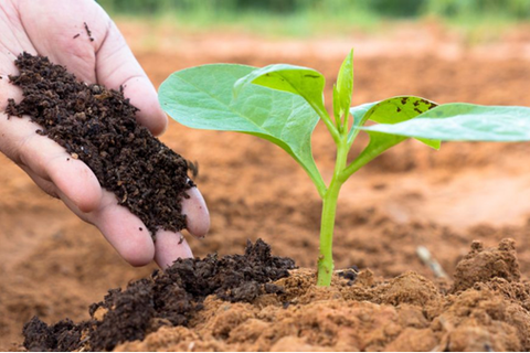 Dùng phân bón hữu cơ sẽ tạo tiền đề cho nông sản sạch