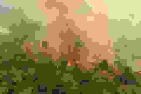 Cháy rừng nhiệt đới Amazon đe dọa 265 loài đứng trước nguy cơ tuyệt chủng